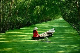Tour du lịch miền Tây, ĐBSCL mùa nước nổi | ĐỒNG THÁP - CHÂU ĐỐC – RỪNG CHÀM TRÀ SƯ  (2n/1đ)